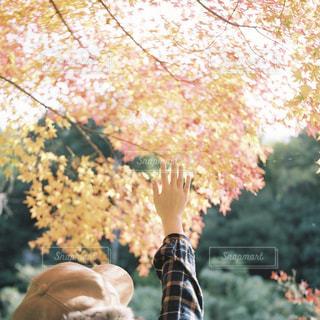 秋に手を伸ばす。の写真・画像素材[2759624]