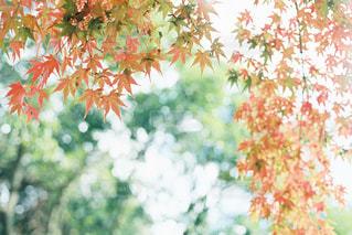 紅葉狩りの写真・画像素材[2763597]