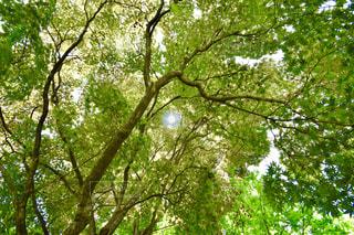 森の木の写真・画像素材[2221901]