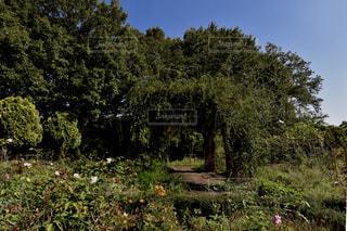 ガーデンの写真・画像素材[2223382]
