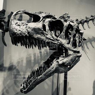 恐竜のクローズアップの写真・画像素材[2219256]