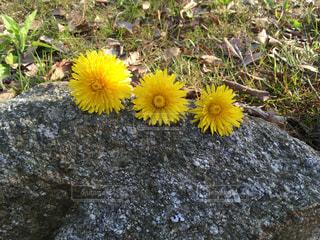 草の中の黄色い花の写真・画像素材[2234096]