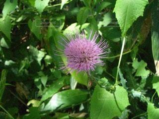 花のクローズアップの写真・画像素材[2222401]