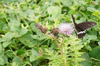 自然の蝶をおいかけての写真・画像素材[2220311]