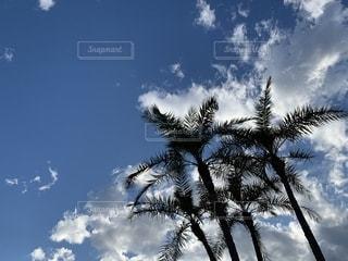 ヤシの木の写真・画像素材[2222589]