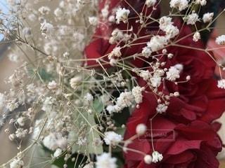 花のクローズアップの写真・画像素材[2223932]
