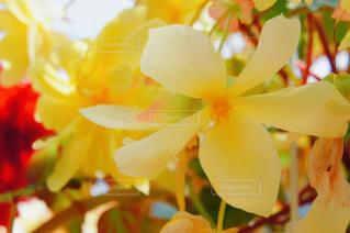 Flower close-up🌸の写真・画像素材[2238890]