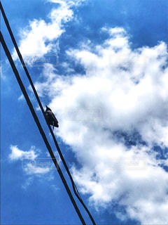 青空とカラスの写真・画像素材[2224012]