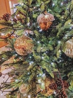 クリスマスツリーの写真・画像素材[2227742]