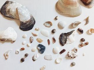 夏休みに拾い集めた貝殻の写真・画像素材[885388]