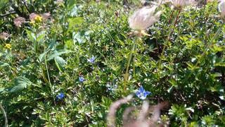 チングルマと高山植物の写真・画像素材[2221637]