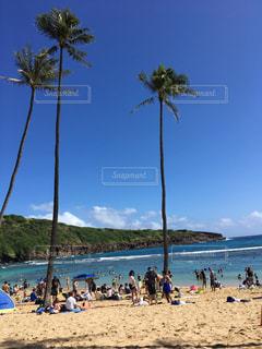 ハワイのビーチの写真・画像素材[2221719]