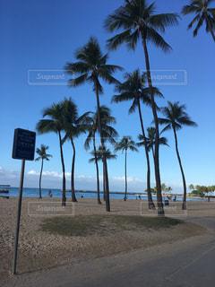 ヤシの木のあるビーチの写真・画像素材[2221726]