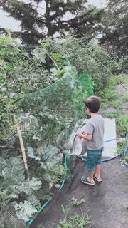 家庭菜園の写真・画像素材[2304023]