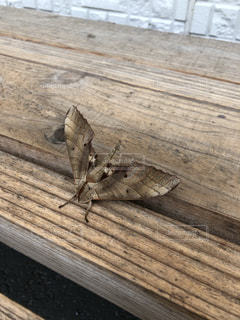 木の表面の昆虫の写真・画像素材[2222782]