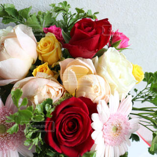 花の写真・画像素材[2253771]