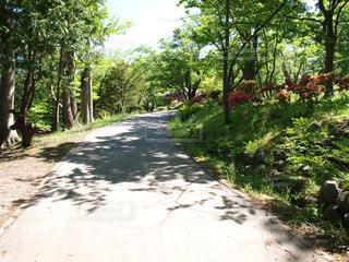 公園に続く緑に囲まれた一本道の写真・画像素材[124349]