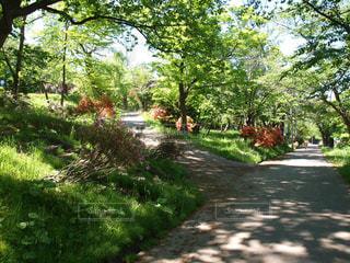 公園内にある散策路。自然が多く快晴で気持ちがいい。の写真・画像素材[124354]