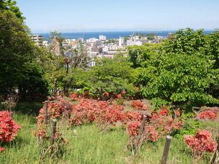 北海道小樽市にある花園公園の頂上からの景色。小樽港。つつじ。の写真・画像素材[124356]