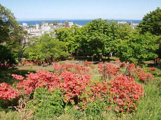 北海道小樽市にある花園公園のつつじと小樽の港の写真・画像素材[124358]