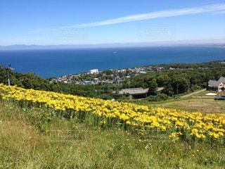 黄色い百合と海と青い空。小樽の景色。の写真・画像素材[175778]