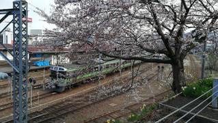 線路と田舎と桜(北海道小樽駅付近)の写真・画像素材[2443417]