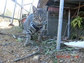 猫の写真・画像素材[30103]