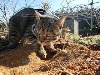 猫の写真・画像素材[30119]