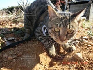 猫が好きの写真・画像素材[30121]