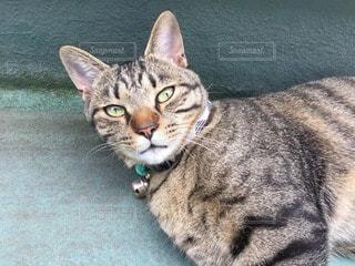 猫の写真・画像素材[73405]