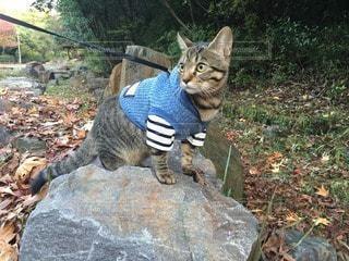 猫の写真・画像素材[75760]