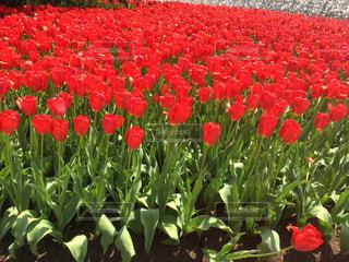 花の写真・画像素材[550588]