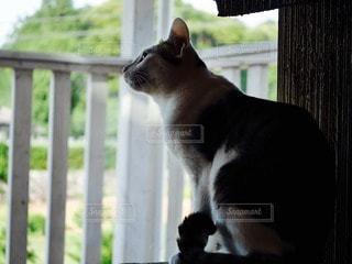 猫の写真・画像素材[88331]