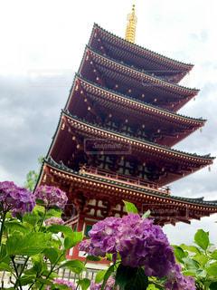 花のクローズアップの写真・画像素材[2224397]