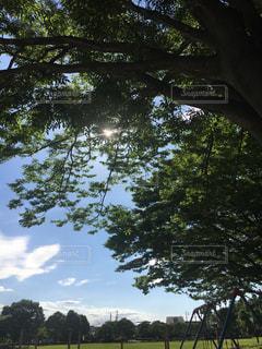 公園の大きな木の写真・画像素材[2224639]