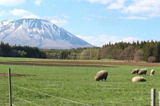 雄大な山と草原で放牧される羊たちの写真・画像素材[2225719]