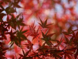 秋の景色の写真・画像素材[2245769]