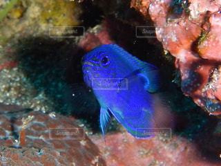 水の下を泳ぐ魚の写真・画像素材[2226668]