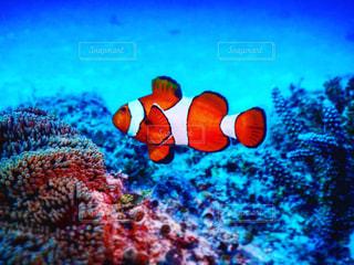 水の下を泳ぐ魚の写真・画像素材[2226802]