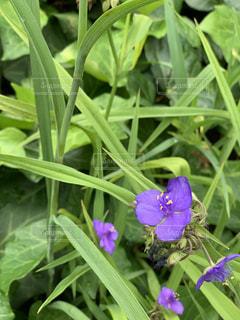 道端に咲く名の分からない紫の花の写真・画像素材[2244988]