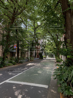 木漏れ日の注ぐ道路の写真・画像素材[2246978]