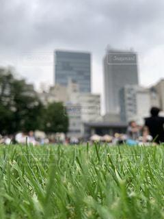 公園の綺麗に切り揃えられた芝生の写真・画像素材[2289225]