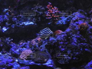 須磨水族館水槽9の写真・画像素材[2412886]