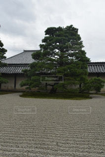 天龍寺内庭園2の写真・画像素材[2466839]
