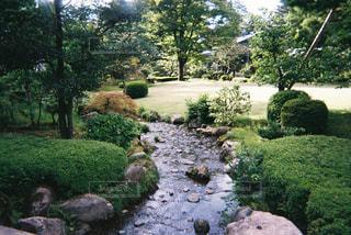庭のクローズアップの写真・画像素材[2228266]