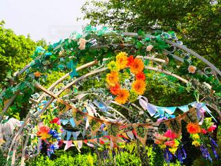 花園のクローズアップの写真・画像素材[2228316]