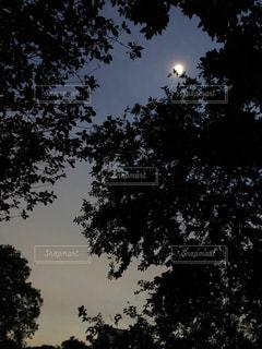 暮れゆく森の写真・画像素材[2237262]