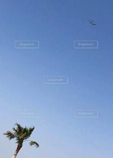 飛行機になりたい 椰子の写真・画像素材[2269503]