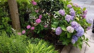 花園のクローズアップの写真・画像素材[2270597]