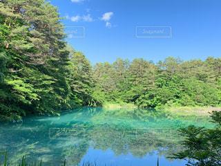 木々に囲まれた水域の写真・画像素材[2228857]